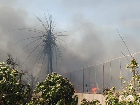 Vườn cây ăn trái kế bên cũng bị cháy xém